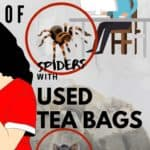 get rid of mic and spiders using used tea bags