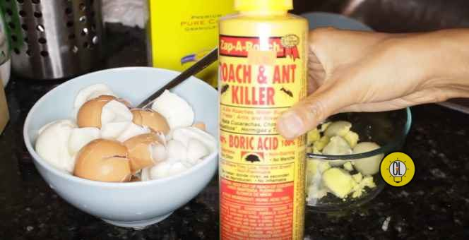 best home remedy to get rid of cockroaches