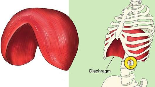 hiccups and diaphram
