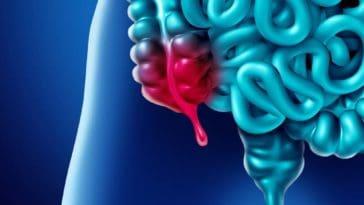 function of appendix
