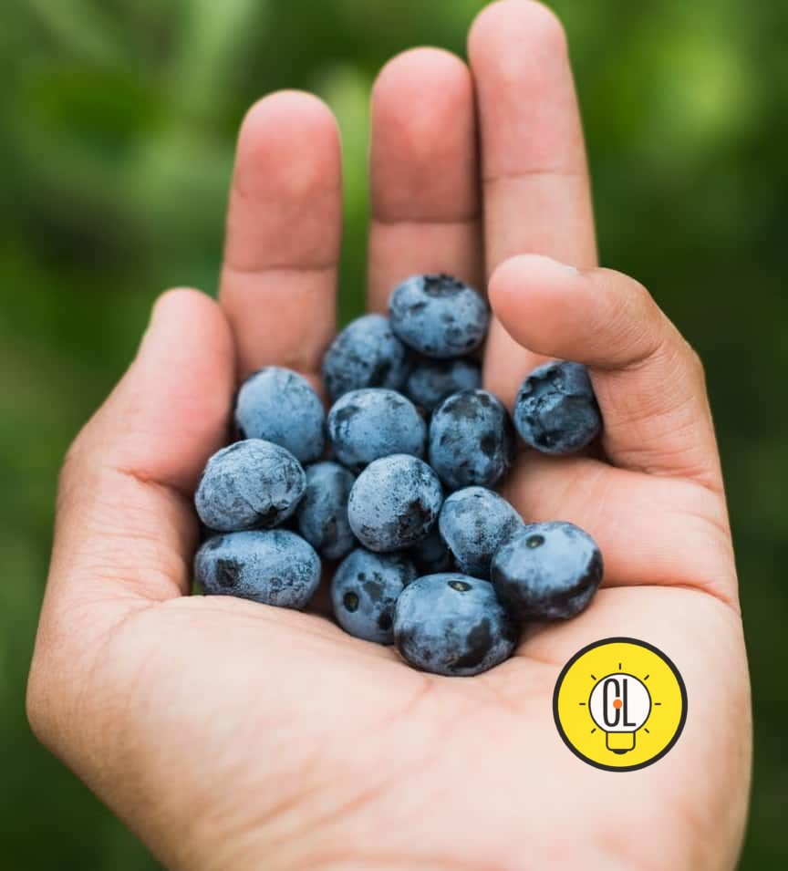 weight loss health benefits of blueberries