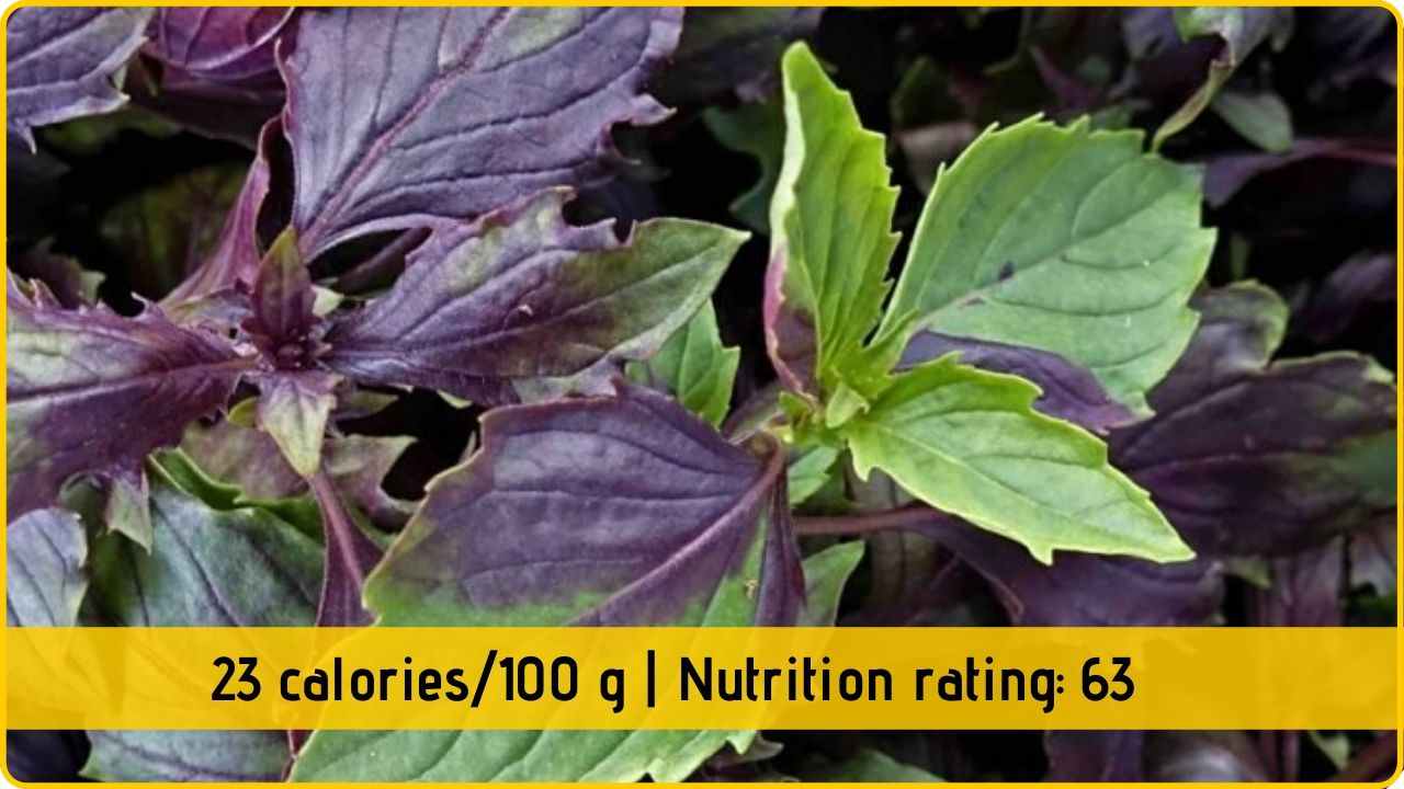 basil nutrition health benefits