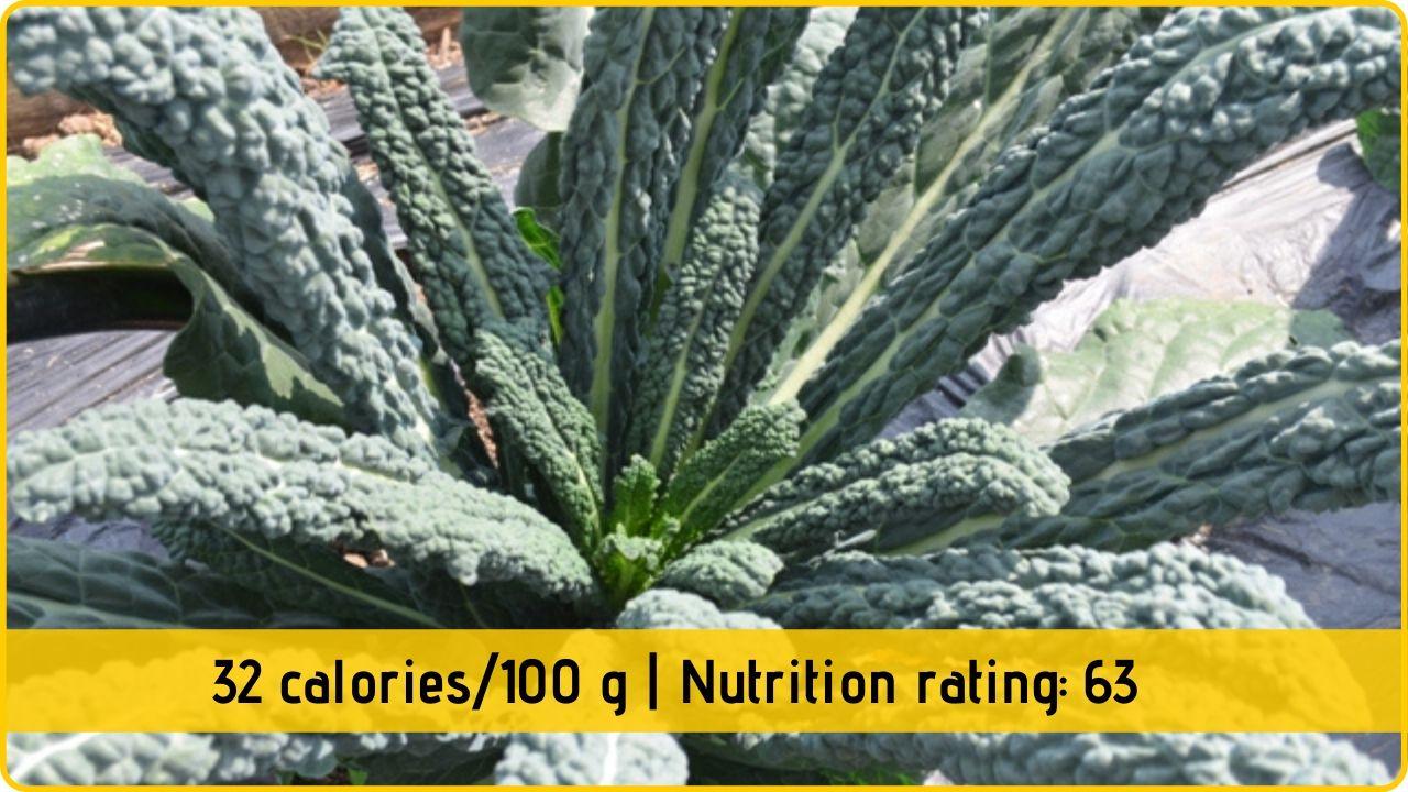 black cabbage nutrition health benefits