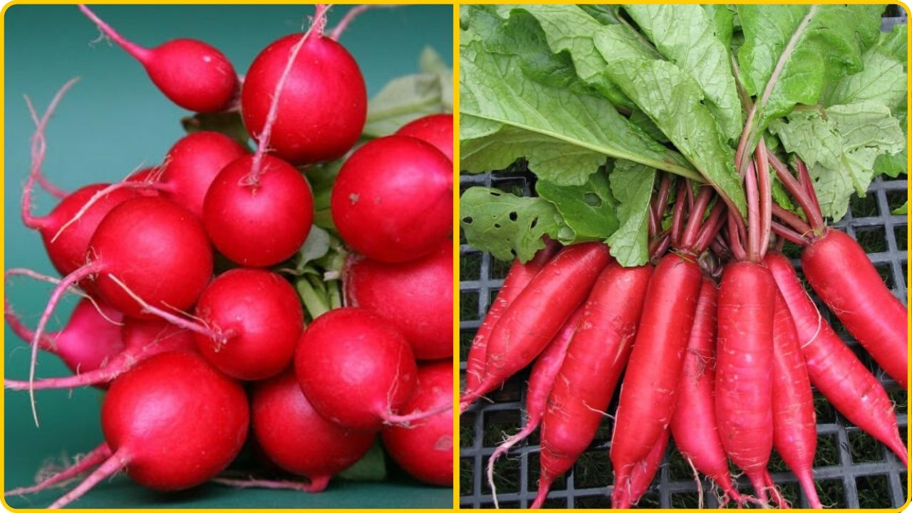 hot radish for a stuffy nose nasal congestion