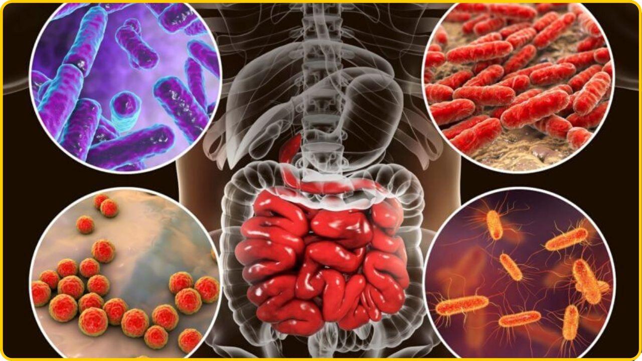 prevent coronavirus gut bacteria immune system