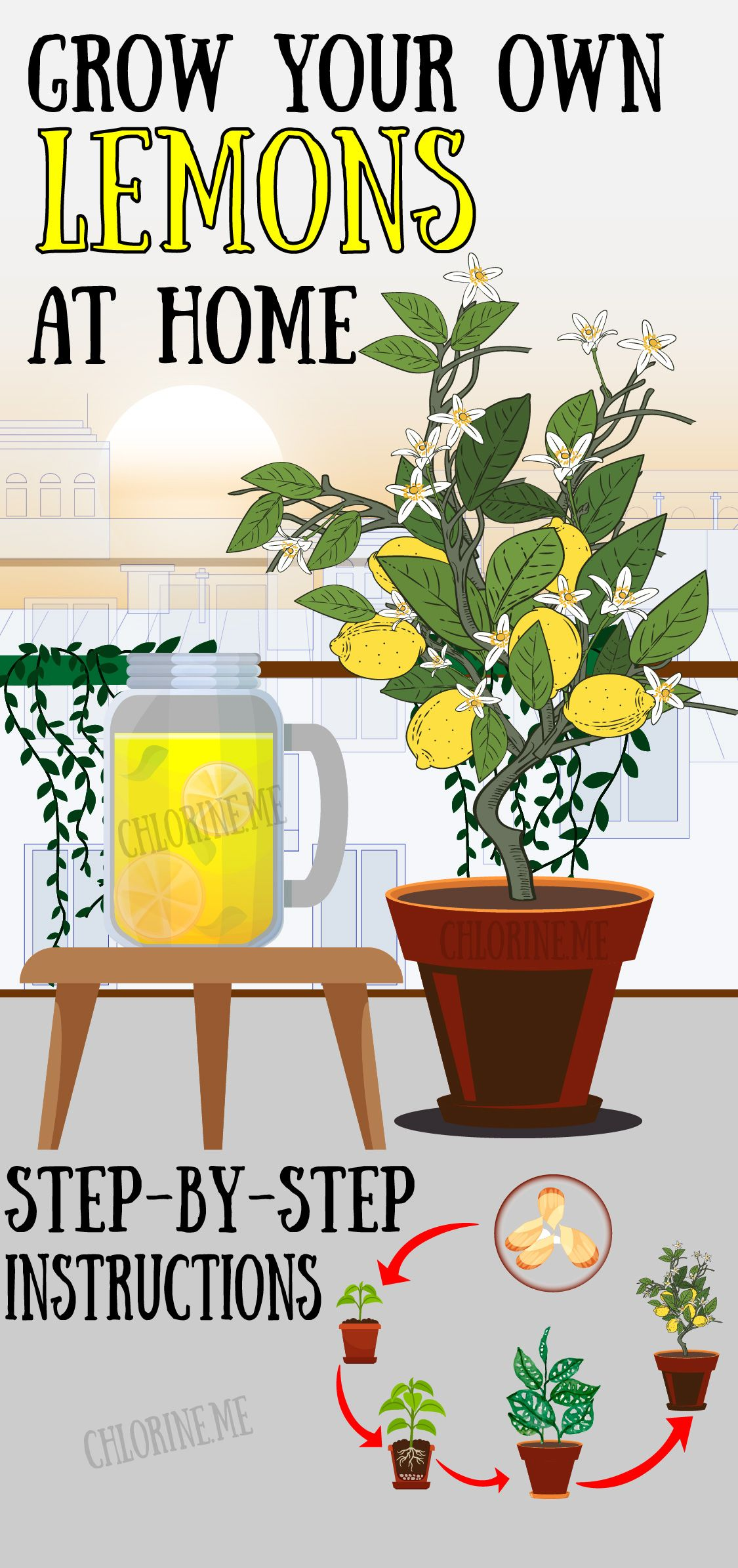GROWN YOUR OWN LEMON TREE FROM SEED AT HOME
