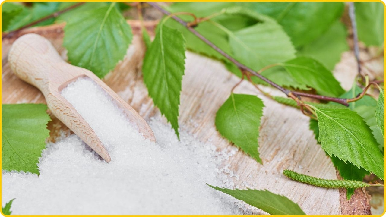 xylitol sugar alternative