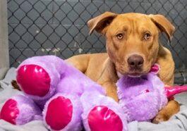 Dog Tries Stealing Same Toy 5 Times, Reward is Heartwarming