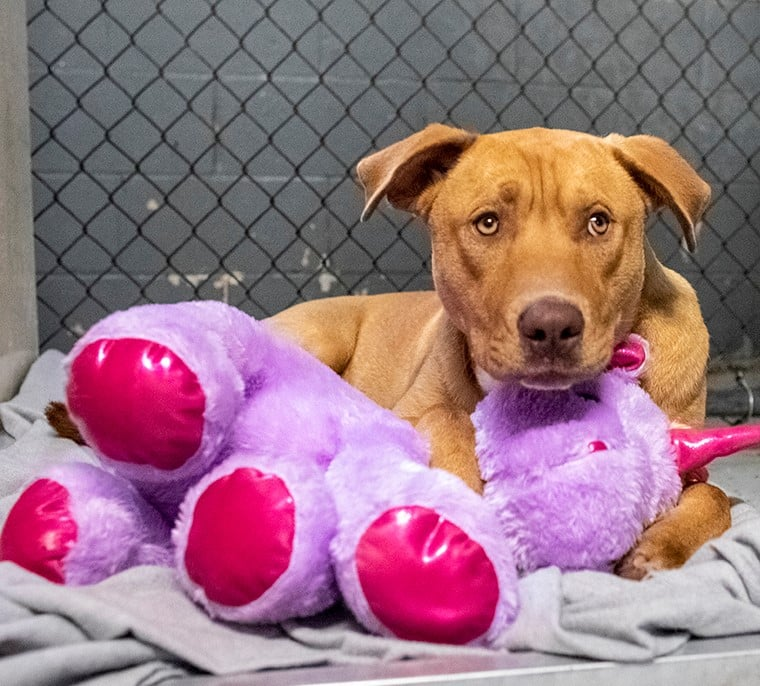 Dog Tries Stealing Same Toy 5 Times, Reward is Heartwarming