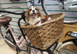 best dog bike basket