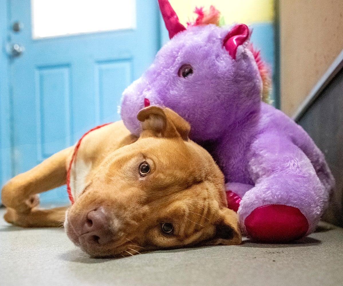 heartwarming dog story