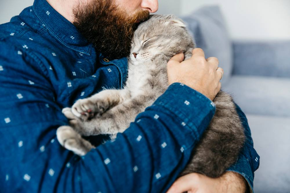Earning a Cat's Love is Not Easy We Cracked The 5 Codes For You